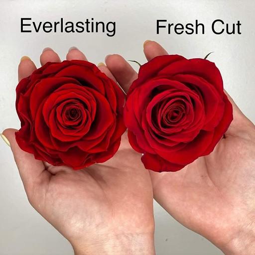 fresh and everlasting roses orlando