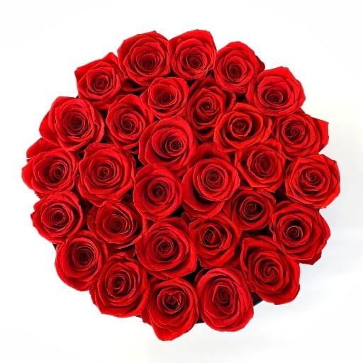 Roses Everlasting Orlando